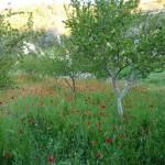 Райский сад Афона