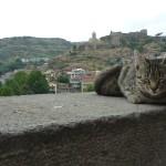 Он тоже тбилисский житель